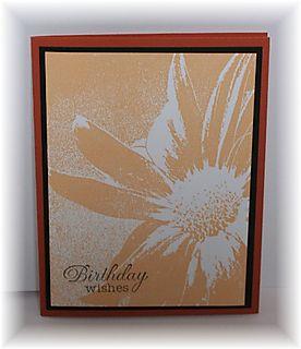 Bday orange shady daisy