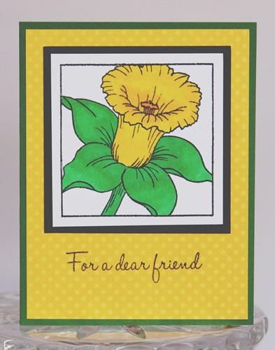 Daffodil friend close